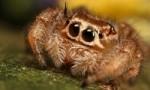 借助3D打印装置科学家发现蜘蛛能听到声音